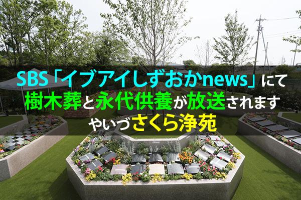 SBS「イブアイしずおかnews」にて樹木葬と永代供養が放送されます|やいづさくら浄苑