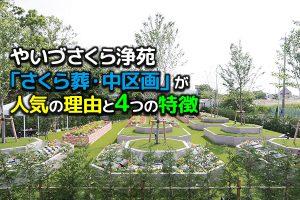 【やいづさくら浄苑・「さくら葬・中区画」が人気の理由と4つの特徴】