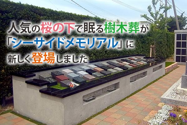 静岡県 富士山|人気の桜の下で眠る樹木葬が「シーサイドメモリアル」に新しく登場しました