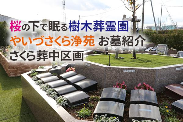 静岡県焼津市 価格| 桜の下で眠る樹木葬霊園やいづさくら浄苑お墓紹介 さくら葬中区画