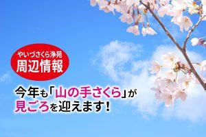 静岡県焼津市 霊園|今年も「山の手桜」が見ごろを迎えます!やいづさくら浄苑  周辺情報