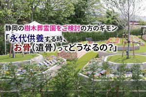 静岡の樹木葬霊園をご検討の方のギモン「永代供養する時、お骨(遺骨)ってどうなるの?」