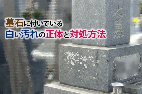 墓石に付いている白い汚れの正体と対処方法|静岡県